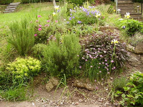 Herb garden May 2008