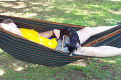 dog pet animal hammock rest