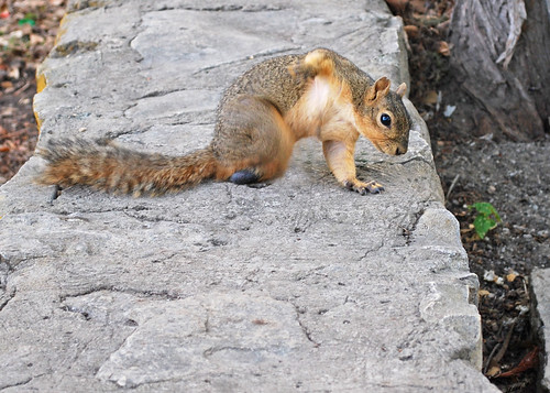Squirrel One-handed Push Up