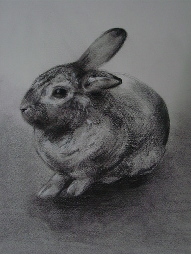 Study Rabbit 170708