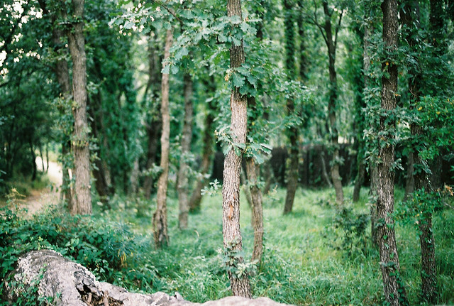 trees summer france colour green analog forest photography la nobody cote provence grimaud dazur