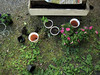 kukkaprojekti (yonnaxxx) Tags: elo koti kukat