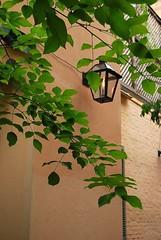 Gas lamp (faungg's photos) Tags: green leaves nikon neworleans gaslamp 1855mm d40x july292008