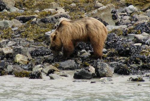 grizzlyriocks