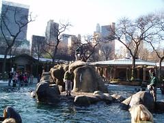 Central Park Zoo (jane_sanders) Tags: park nyc newyorkcity newyork zoo centralpark manhattan sealion centralparkzoo essexhouse solowbuilding cityspirecenter
