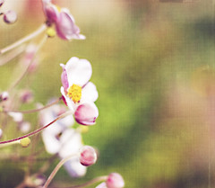 Drops of sunshine. (Forever October Photography) Tags: pink flower visiongroup
