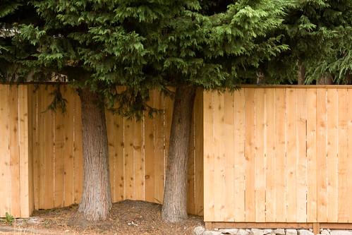 Polite Fence