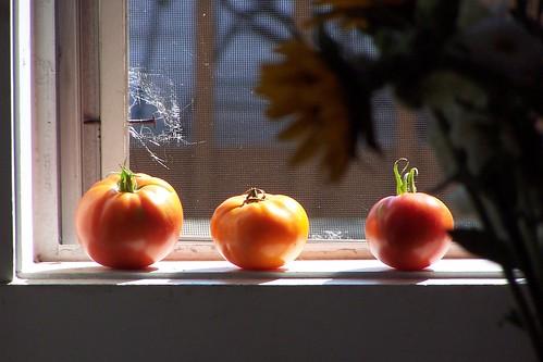 mmmm tomatoes
