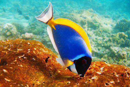 2848768760 16793f1ed0 Žuvų Patiekalai. Žuvies Paruošimas