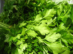 Flat-leafed parsley