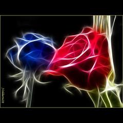 Roses (Juan Calderon) Tags: roses macro love nature amor explorer rosa otoo rosas espinas sentimiento palometa s6500fd mywinners fujifilms6500fd platinumphoto 6500fd finepixs6000fd fuji6500 fujifilmfinepixs6500fd fuji6500fd fujifilmfinepixs6000fd blauigrana jcaldern spiritofphotography juancaldern