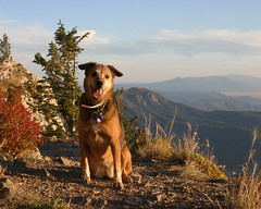 Two-socks (bloomgal) Tags: dog pet mountain mountains newmexico outdoors mutt hiking buddy sandiamountains