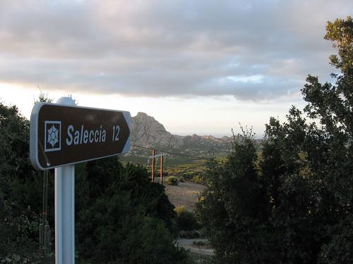 Strada per Saleccia