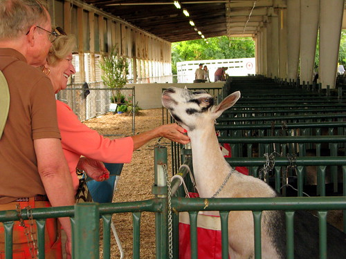 100 Things to see at the fair #33: Goat shed