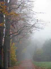 Novembertag (3) ... por Martin Volpert