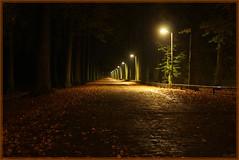 15okt08: herfst Gravenallee Almelo. (guus timpers) Tags: autumn night nacht herfst gracht beuken huize almelo gravenallee nachtopname slotgracht beukenlaan