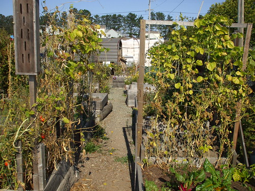 Point Reyes Station community garden