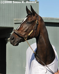 Zenyatta Rules! (Rock and Racehorses) Tags: portrait headshot halter tack racehorses zenyatta notack