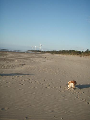 二路與風車