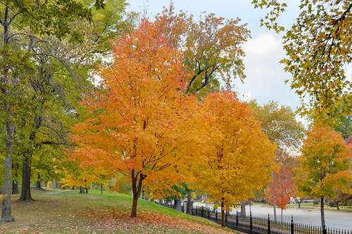 Fall trees, Lafayette Square Park, in Saint Louis, Missouri, USA