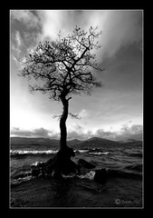 Milarrochy Bay Tree (Samantha Nicol Art Photography) Tags: white black tree beach water clouds bay scotland nikon waves explore loch samantha lomond soe nicol balmaha blackwhitephotos oldschooldigital milarrochy thesecretlifeoftrees damniwishidtakenthat sammikins1976 samanthanicolartphotography