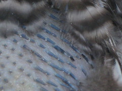 close-up of the new feathers