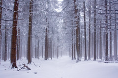 Winterberg - The Forest (Geoffrey Gilson) Tags: schnee winter white snow tree nature landscape interesting scenery wildlife hiver isolation neige simple paysage pure weiss arbre blanc baum winterberg canon40d