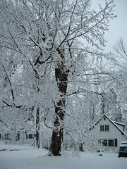 house_tree