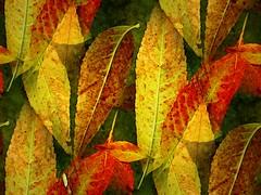 leaf fish (msdonnalee) Tags: fallleaves yellow foglie photomanipulation jaune mexico  dead