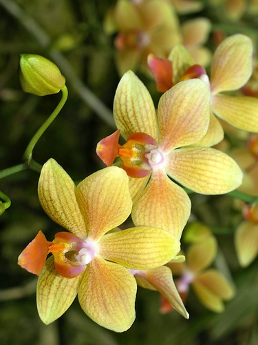O is for Orchids, Bright Tropical Flowers