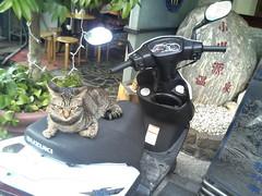 溫泉飯店貓