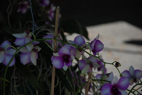 orchids at upper east side market