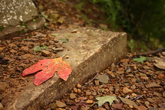 leaf me alone (windybug) Tags: autumn red fall leaves stairs canon leaf rocks ar arkansas 1855mm canonefs1855mm gravel mtnebo dardanelle mountnebo canon1855mm yellcounty 40d arkansasstatepark winrich mountnebostatepark canon40d mountnebofalls mtnebofalls gumspringstrail isopunny