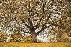 dream tree (an7ana5) Tags: tree dream ne taip ne6 ne4 ne5 ne2 ne8 ne3 ne7 taip2 taip5 taip7 taip10 taip3 taip4 taip6 taip8 taip9 fotofiltroauksas fotoauksas