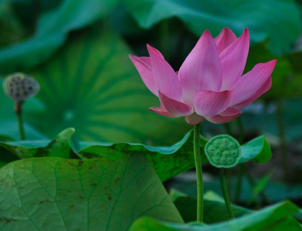 Quiet blossom 安静的绽放 ...