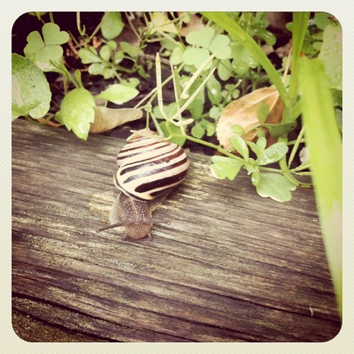 snail by greetdesign