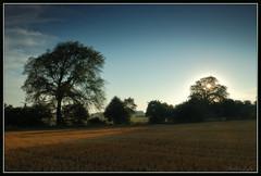 Light Play (Dietrich Bojko Photographie) Tags: morning field d50 germany landscape deutschland shadows kitlens august nikond50 schleswigholstein circularpolarizer 18mm cokinp121 nikkor1855mm cokinp164 gnd8 mywinners abigfave aplusphoto gfxmaster dietrichbojko