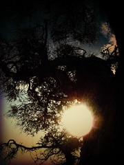 Dark Sun (CheshireMoon) Tags: tree nature silhouette moody eerie spooky atmospheric cheshiremoon