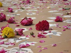 Rajiv Gandhi Park in India (Shaima82_4) Tags: park pink india flower nature grave ship floor gandhi nippon 20 maru yallow rajiv swy swy20