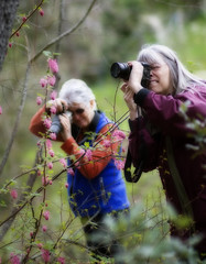 Ready, Set, Aim (The Pack) Tags: flower oregon photographers ashland lithiapark pinkshoe 85mmf14 karenphillips oregontata camraart thepack:a=1