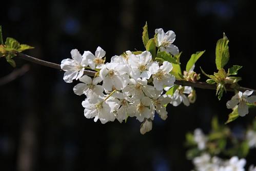 2008-04-13_20