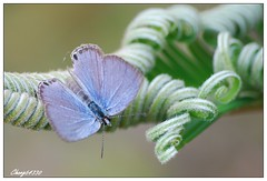 (chang64330) Tags: butterfly hualien