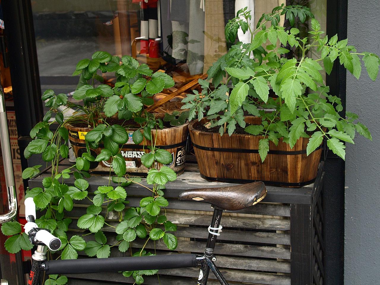 2008-05-30 Garden Of Hunky Dory