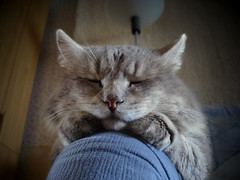 pourquoi avoir un chat mignon