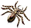 spider (3doel82) Tags: fish bird animals insect gambar koleksi ikan belajar burung binatang carnivora serangga mamalia amphibi