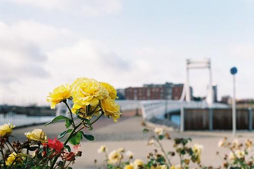 Last Bloom?