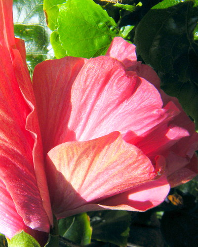 Terri's Pinks; petal layers