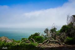 Coastal Trail, San Francisco (ntalka) Tags: sanfrancisco california usa fog bay goldengatebridge sanfranciscobayarea bayarea presidio coastaltrail 5photosaday canon40d