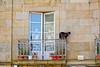 Window, balcony and cat (Santiago de Compostela, Spain)