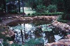 fishpond 26 1 03w (orgasmictomato) Tags: fish water pond stonework australia waterlilies waterfeature rendered fishpond naturalstone cementpond sonyhdrsr12e
